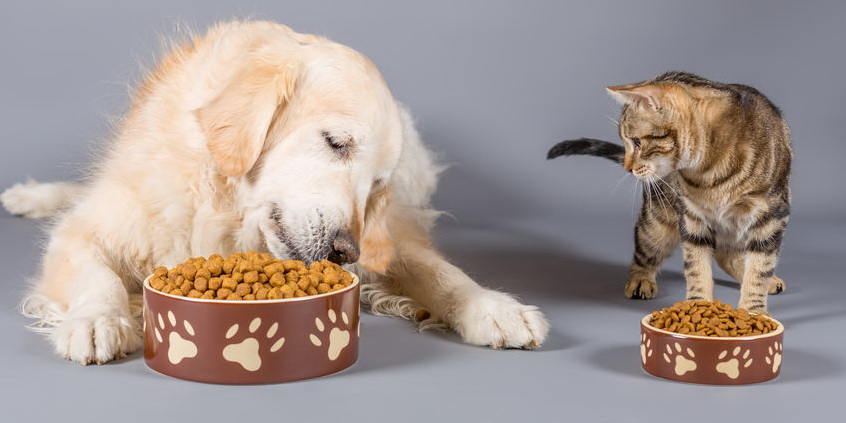 按照公告规定对宠物饲料进行卫生指标检测