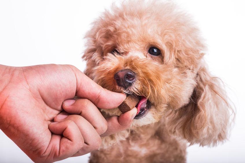 宠物咀嚼片类产品营养指标定制检测