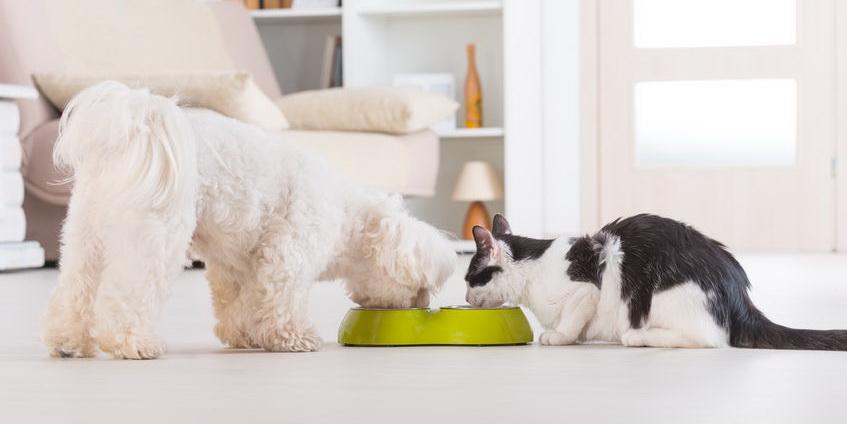 冻干宠物食品营养指标定制检测