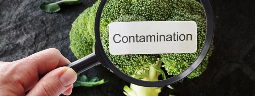 食品中污染物检测服务