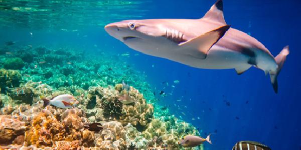 海洋环境监测服务