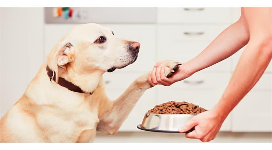 AAFCO检测(犬)