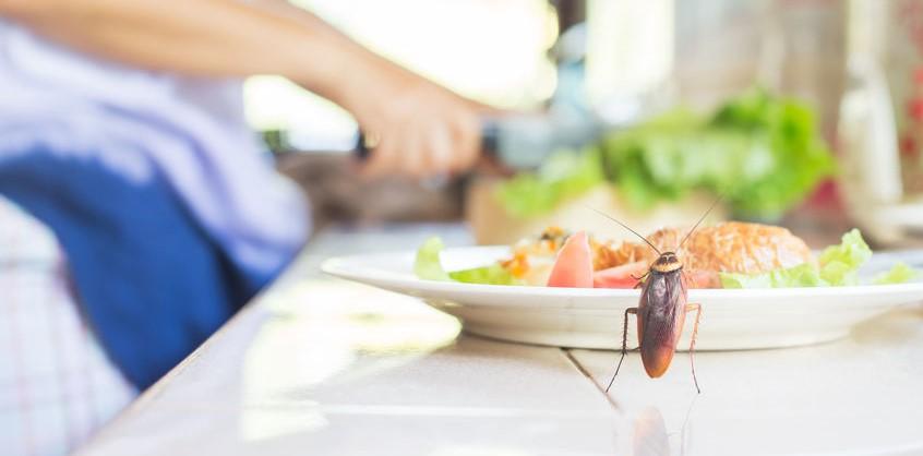 餐饮业有害生物防治