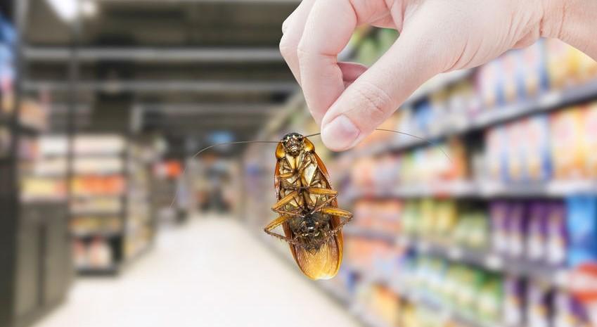 确保生产企业环境免受虫害感染
